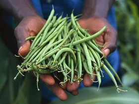 Over half the world's population could rely on food imports by 2050