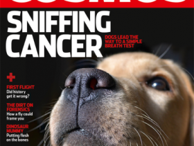 Sniffing Cancer: dogs lead the way to a simple breath test