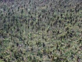 Typhoon Haiyan may have created a carbon burp