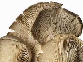 Weatherwatch: The cleverness of mushrooms
