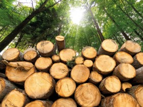 Biomass energy: green or dirty?